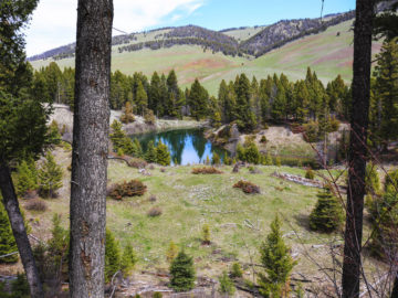 Hammer 'Em Outfitters Montana Hunting - Spring Basin Emerald Pond