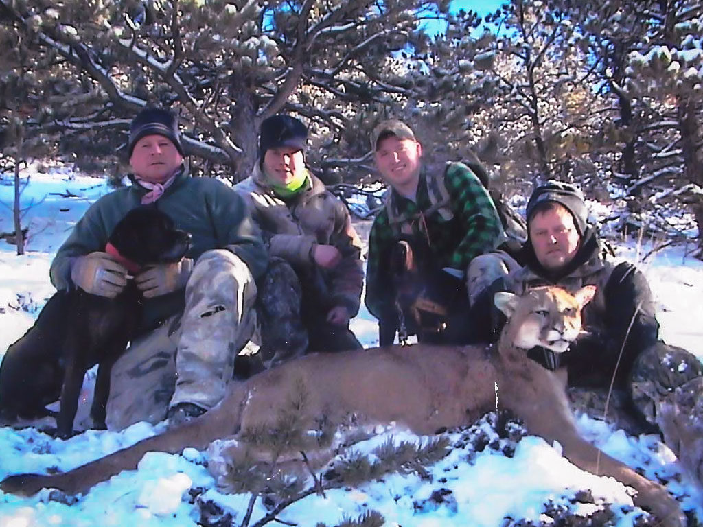 Hammer 'Em Outfitters Montana Hunting Mountain Lions