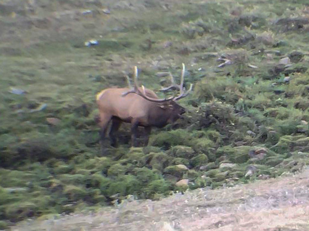 Hammer 'Em Outfitters Montana Hunting Elk and Deer 2016