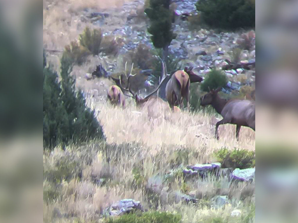 Hammer 'Em Outfitters Montana Hunting Elk and Deer 2017