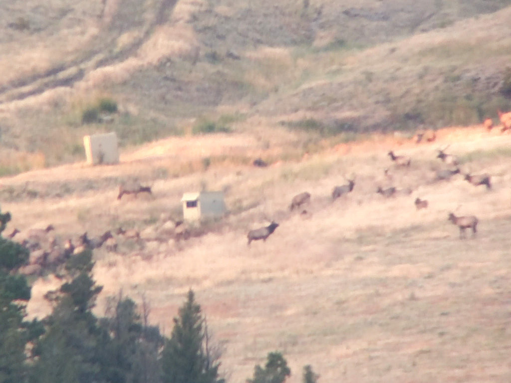 Hammer 'Em Outfitters Montana Hunting