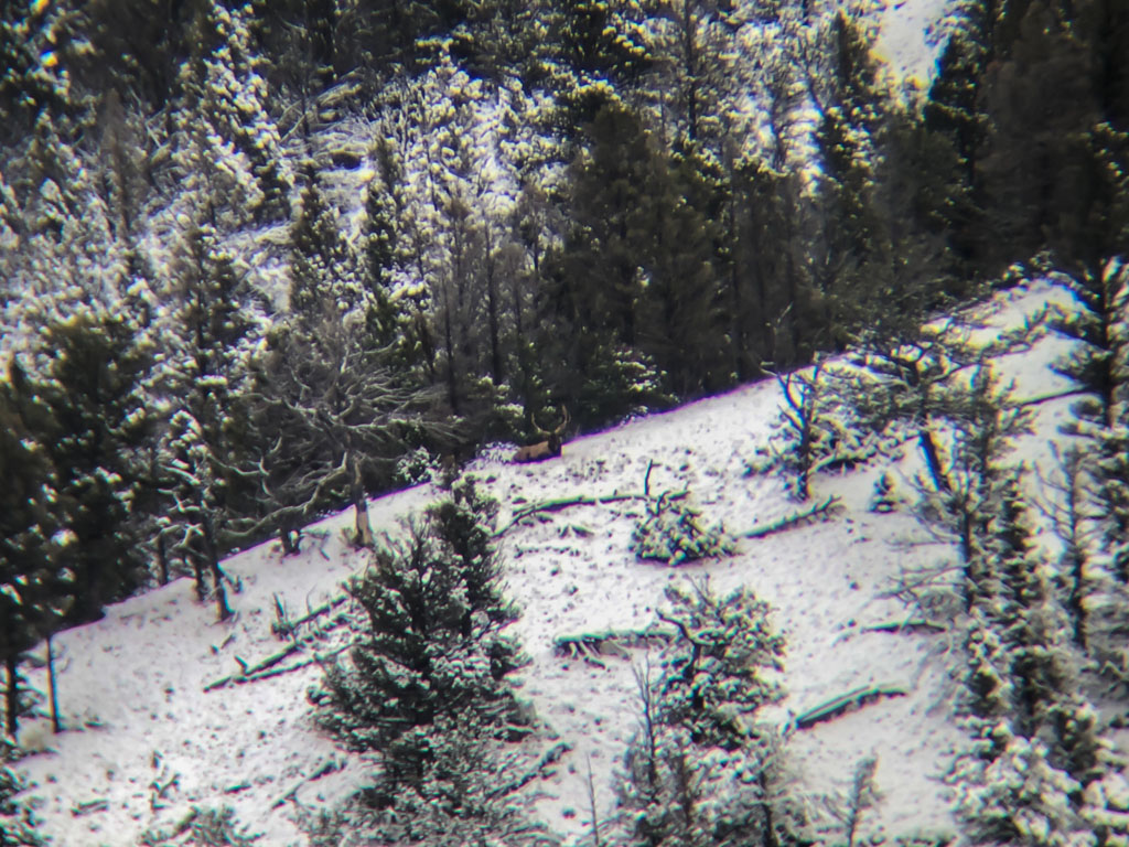 Hammer 'Em Outfitters Montana Hunting - 2019 Elk 10
