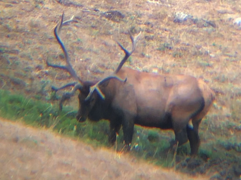 Hammer 'Em Outfitters Montana Hunting - 2020 Elk 15